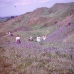 SL-OT-1 Mary Hignett Collection - Bluebells on Old Oswestry - 1964