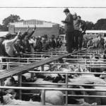 PH-O-5-69-4 - Sheep pens in Smithfield - 1973