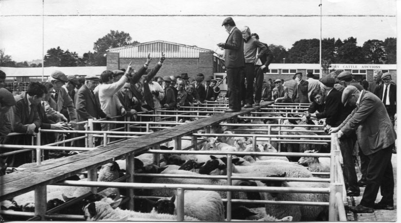PH-O-5-69-4 - Sheep pens in Smithfield - 1973