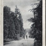 NM-P-30-55 - Road Park Hall Camp 1918